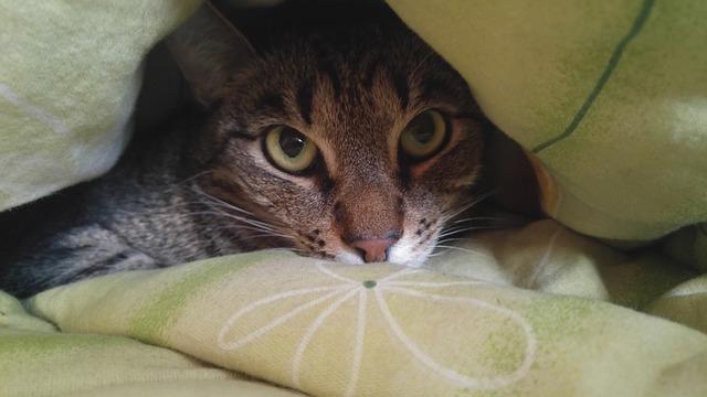 kočka pod peřinou