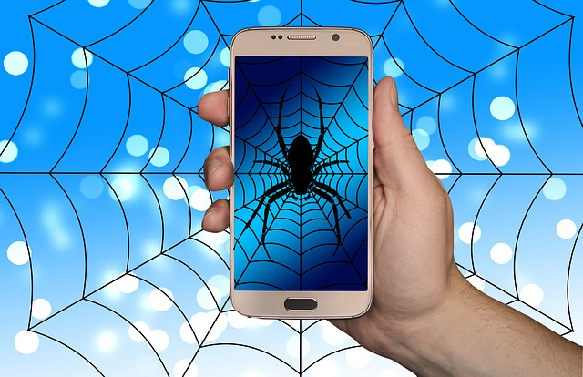 pavouk na webu
